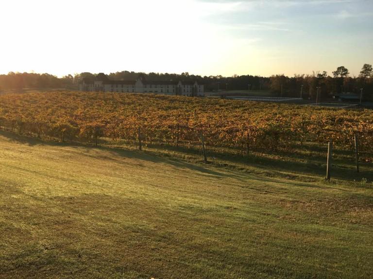 chateau elan, winery, atlanta