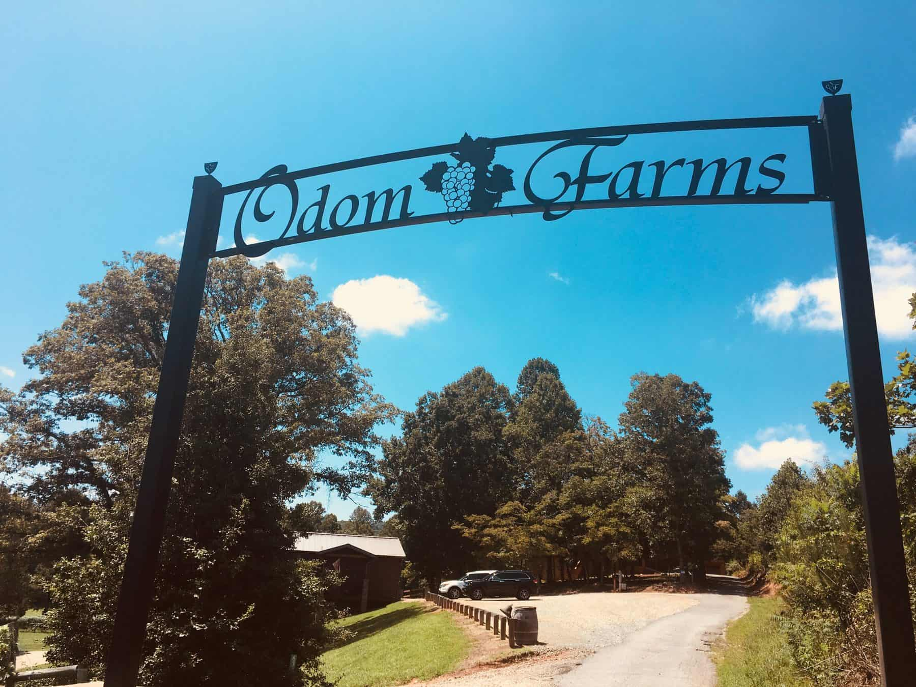 yonah mountain, winery, north georgia, helen