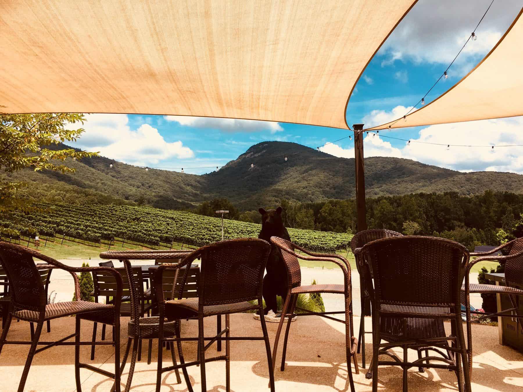 yonah mountain, winery, north georgia, helen