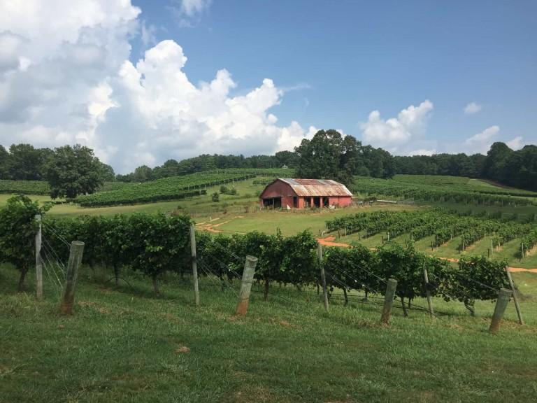 Three Sisters Vineyards, Dahlonega GA